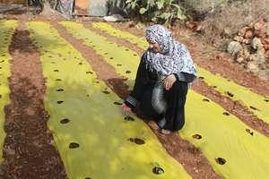 Launching a home gardening small enterprise