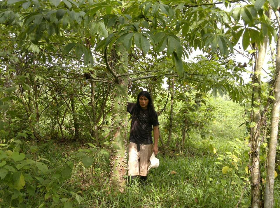 Jimmy at a Kapok (Ceiba) tree planted June 2011,