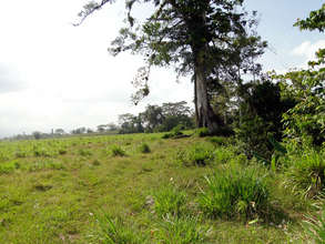 New farm w/giant Chilamate tree awaiting friends