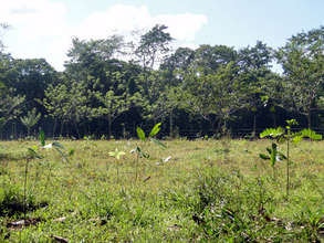 Last trees planted in the Rio Sol Bio Corridor