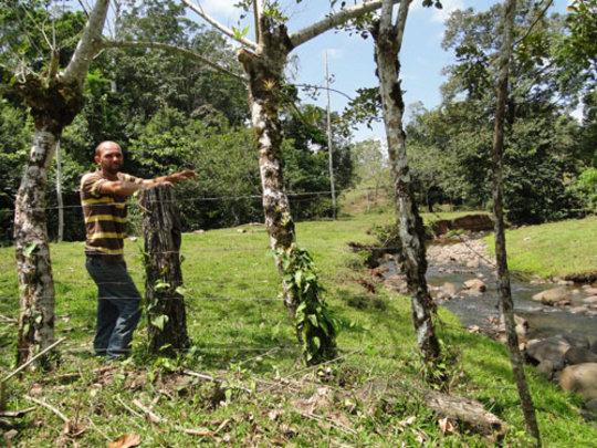 The deforested banks of the Rio Sol