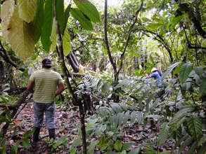 Preparing the planting area at Isidro Acosta's