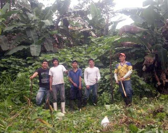 The crew during the second phase planting