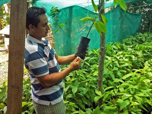 Deibys in his cacao nursery
