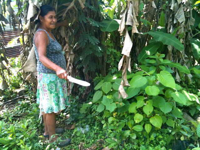 Fidelina showing us her nursery
