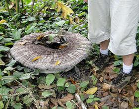 Giant Mushroom on the Rio Sol
