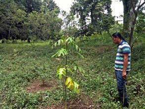 Lillian Tinoco's reforested area planted on event