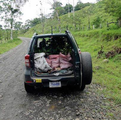 "The car, ""Joya"", hauling trees back and forth"