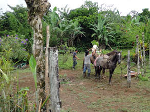 Loading trees on the horses