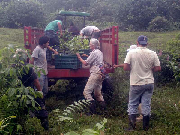 Unloading the trees at the farm