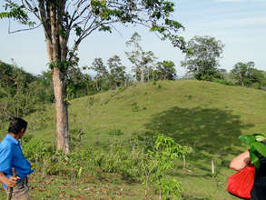 Marvin's 14 hectares of pasture to be planted