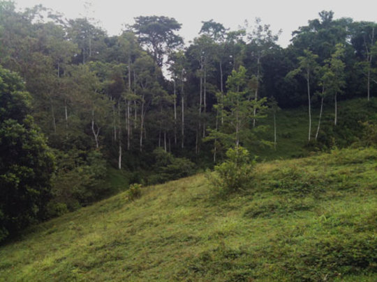 Finca La Nica pasture to be planted