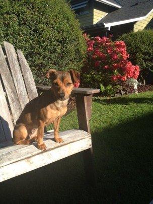 Freya backyard sunshine