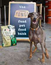 The Pongo Fund Pet Food Bank