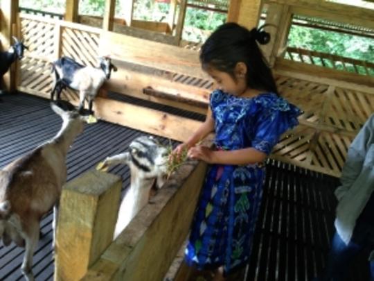 Goat Center in Guatemala