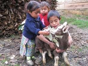 Guatemala Goats Project