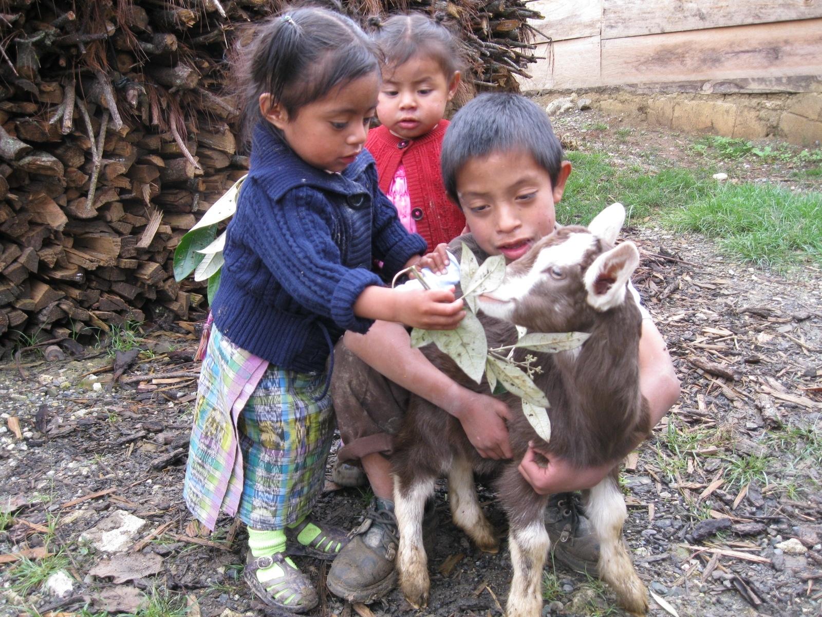 goat disease
