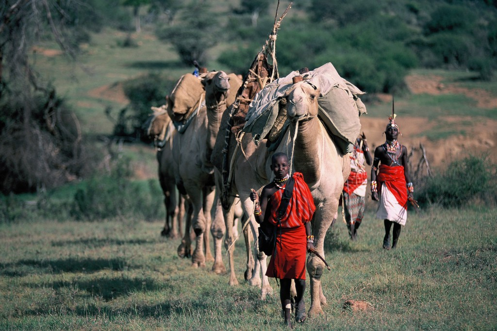 Our Camel Clinic on its way to various remote villages in the Samburu Region of Northern Kenya.