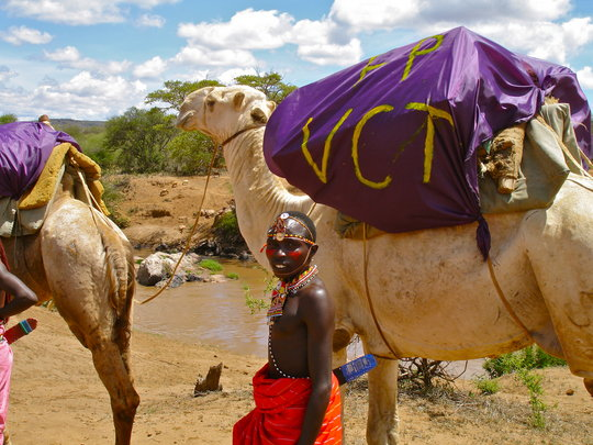 A Man happy to see the camel's arrive!