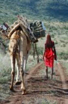 Fridge carried on a camel