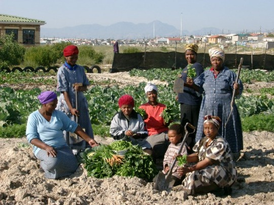 Community gardeners grow top quality fresh food