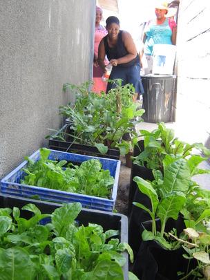Home garden in containers Khayelitsha Jan 2013