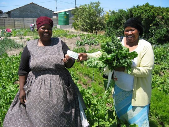 Capacity Building: Urban Farming and Gardening