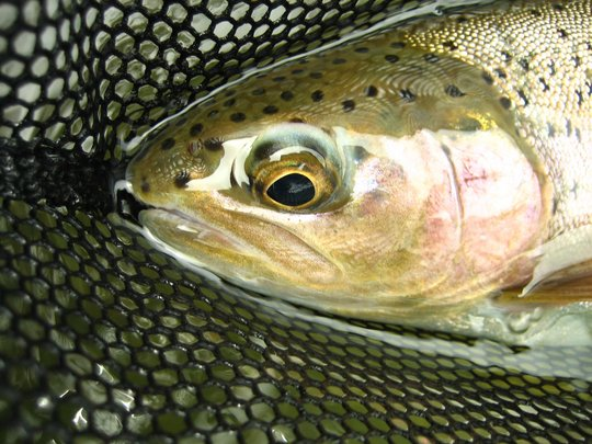 Oregon is home to world-class wild fish