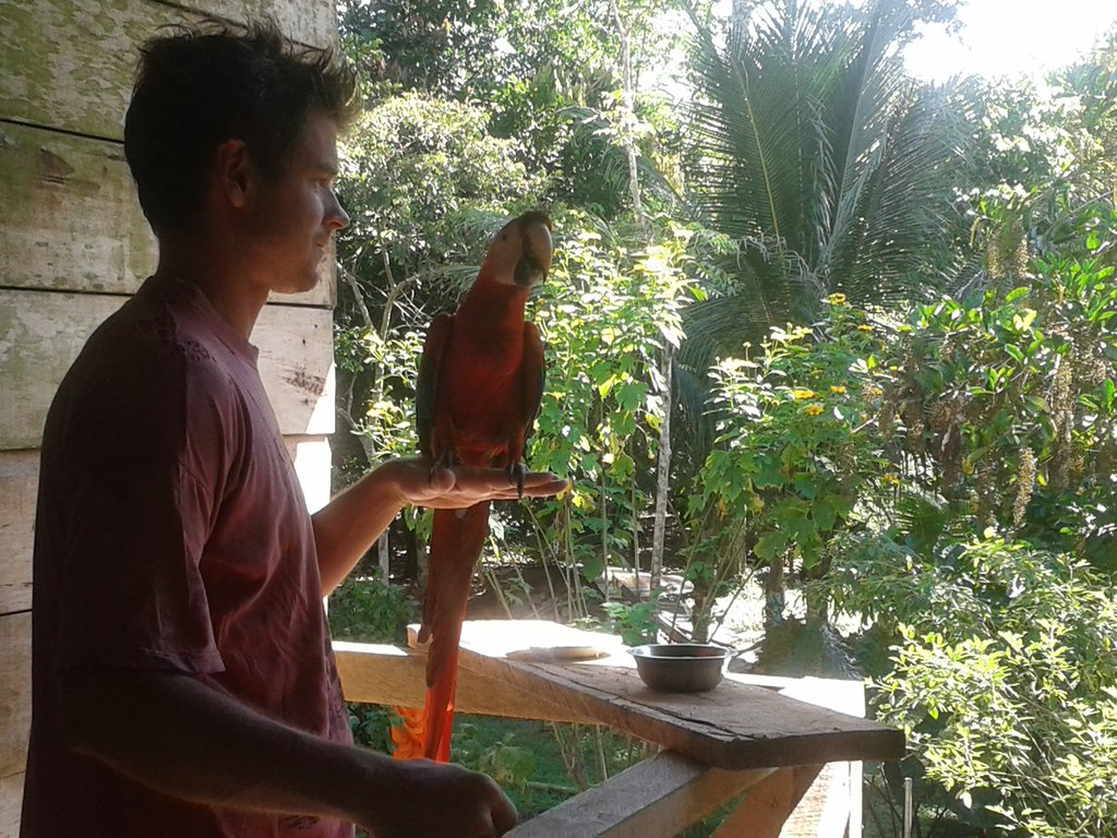 a scarlet macaw at Camino Verde