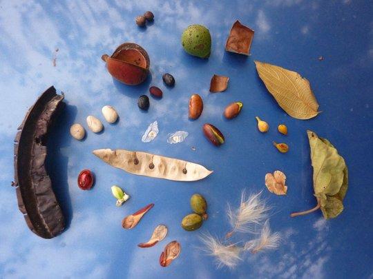 Seeds of native trees of Mpango, Uganda