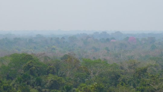 Planetary lungs -the Peruvian Amazon