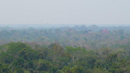 Planetary lungs -the Peruvian Amazon
