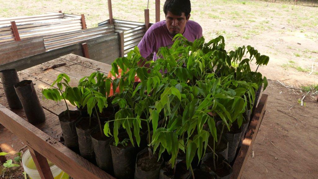 tree seedlings at our nurseries