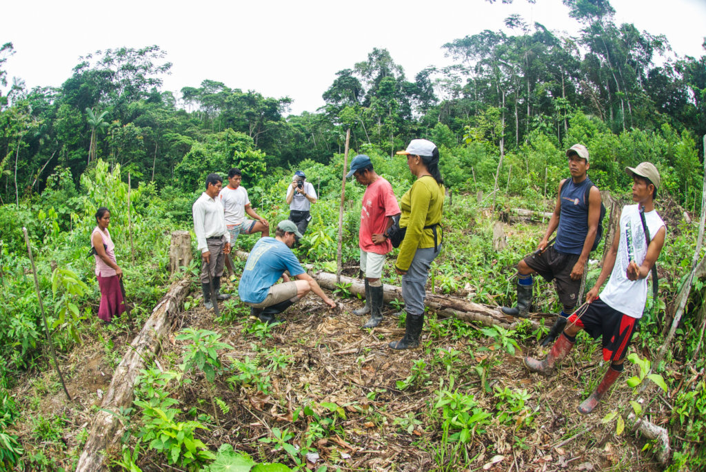 Tree planting in the Peruvian Amazon