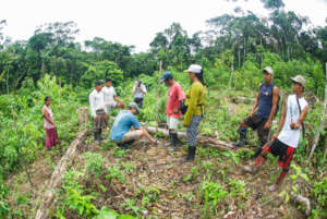 Tree planting in the Peruvian Amazon