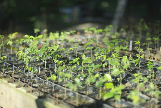 Tree seedlings with biochar soil substrate