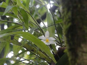 One variety of orchid in this rainforest zone