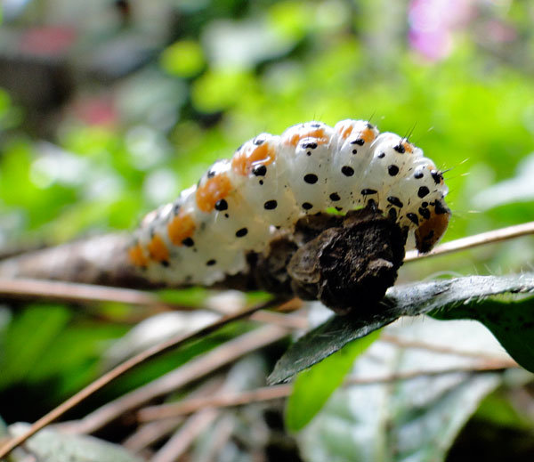 Caterpillar in the rain forest
