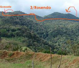 Omar Quesada's forest