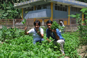 Vegetable gardening as source of income and food