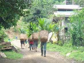 Planting coconut seedlings