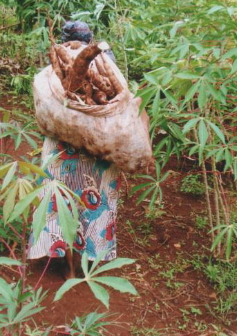 Mrs. Njuguna carrying cassavas
