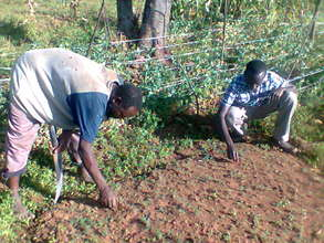 Dennis's community members planting trees