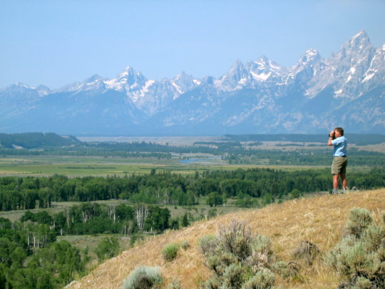 Scanning for wolves and bears outside Grand Teton
