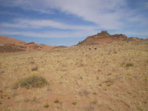 Fence removal on Capitol Reef will benefit wildife