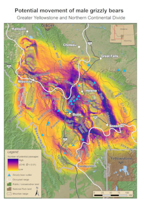 Linking Grizzly Populations in Montana