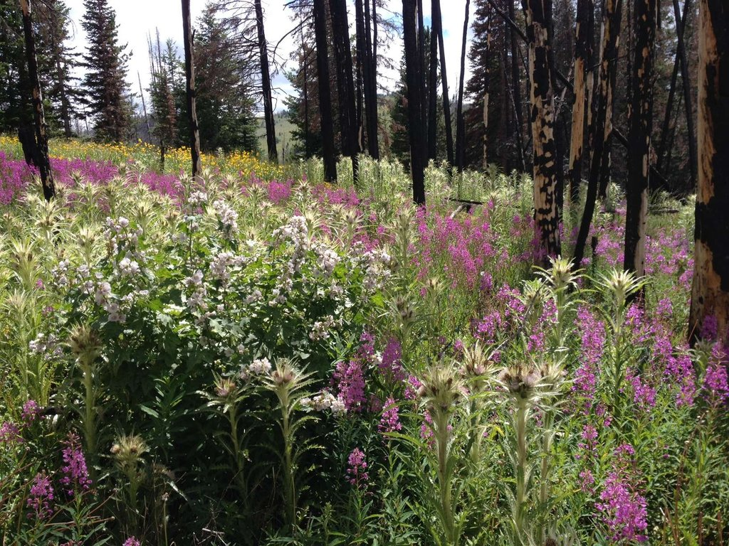 Native plants regenerate quickly without livestock