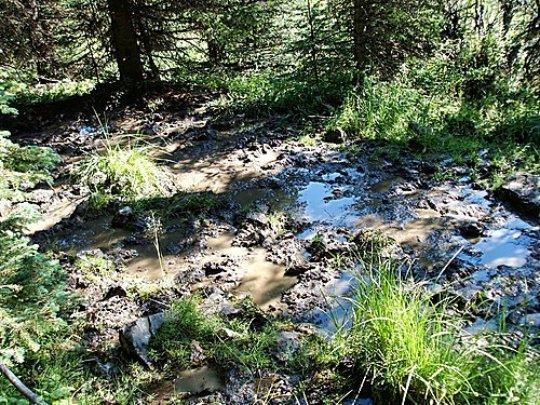 Livestock damage along the riparian areas