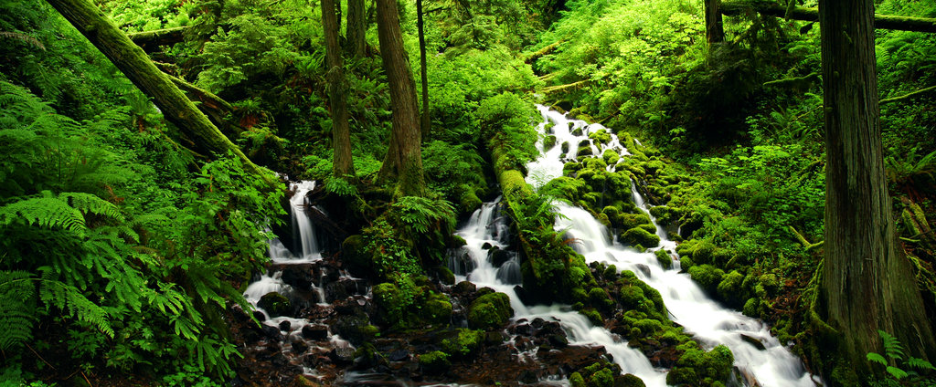 Photographer and Friends of the Columbia Gorge member Greg Lief took this photo of Wahkeena and Fairy Creeks, one of an almost countless number of amazing spots that Friends works to preserve and protect for future generations to enjoy. (Columbia River Gorge, Oregon and Washington, USA)