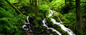 Wahkeena and Fairy Creeks, Columbia Gorge, Oregon
